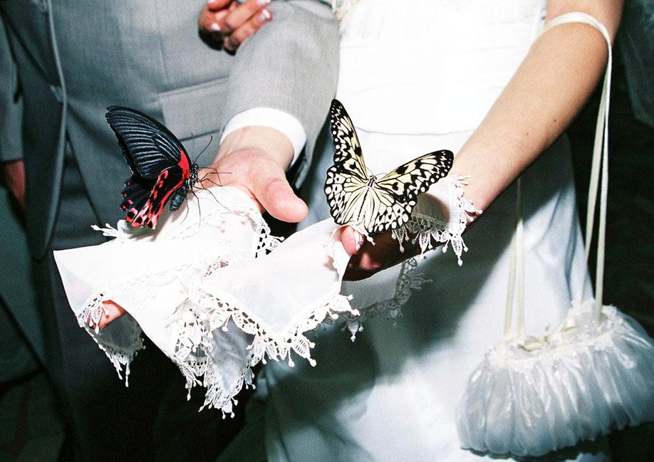 бабочки в подарок, свадебный подарок